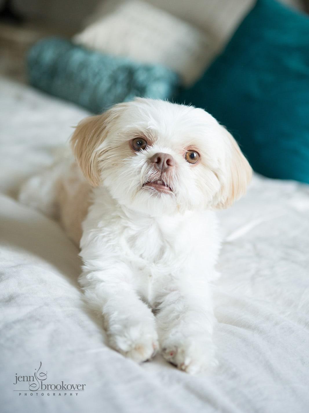 close up of dog taken at home in San Antonio